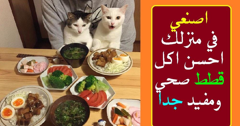 اصنعي في منزلك احسن اكل قطط صحي ومفيد جدا