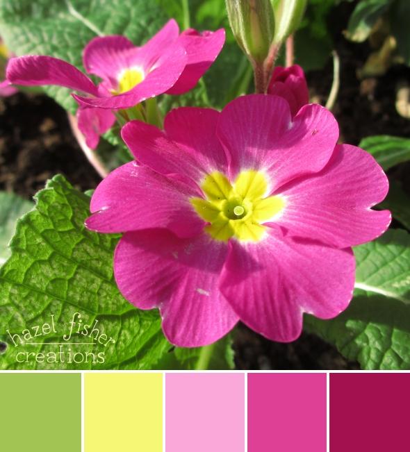 Colour Palette Inspiration Pink Primulas, flower photography, hazelfishercreations
