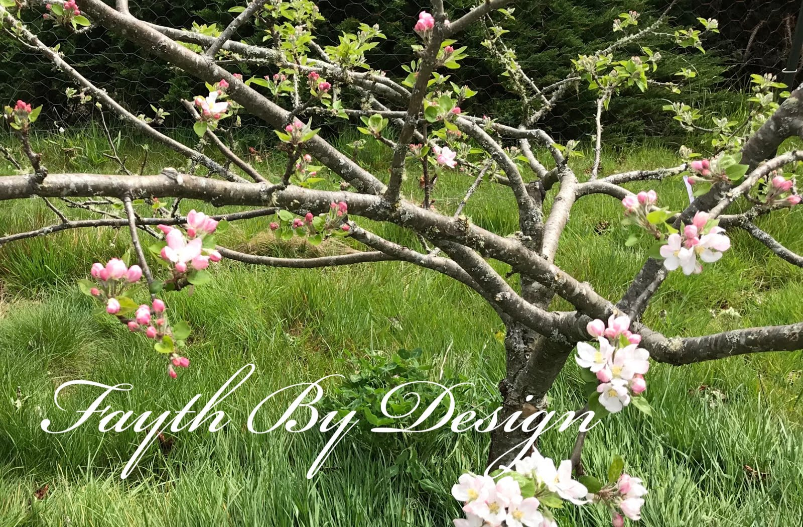 Fayth by Design