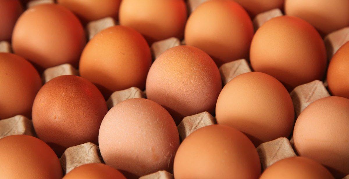 Usaha Agen Telur Ayam Negeri  Distributor Telur Makassar