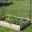 Elevated Base Vegetable Gardening Aspect  ~ Gardening Tutorials
