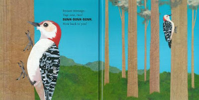 woodpecker illustration in picture book Steve Jenkins