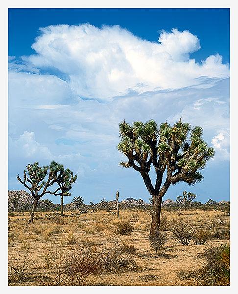 Mojave Desert Native Plants: PRINT TO PIXEL: The Mojave Desert