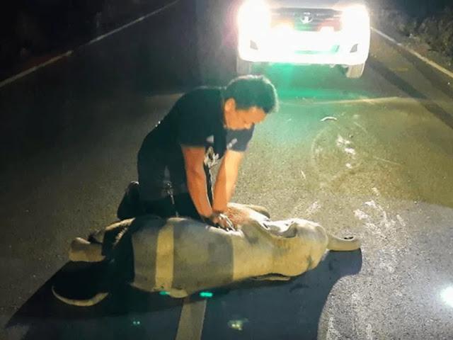Спасатель бросился на помощь слонёнку, который попал в ДТП, и запустил его сердце заново — видео