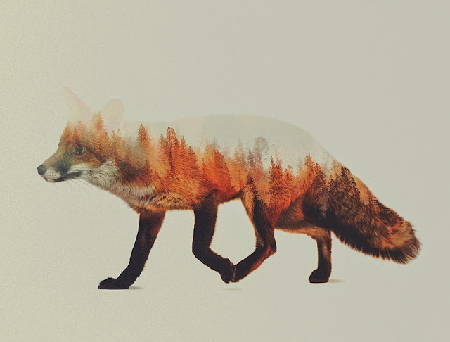 Andreas Lie Fox Double Exposure