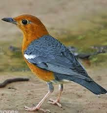 http://www.kabarloka.com/2014/09/14-tips-cara-membedakan-burung-anis.html