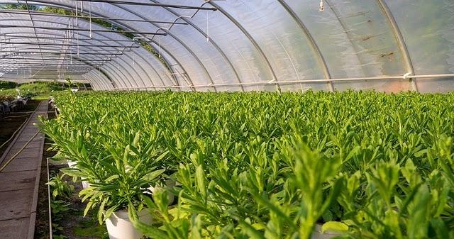 3 Bisnis Sektor Pertanian Yang Prospektif Di Tahun 2020 Mas Malven