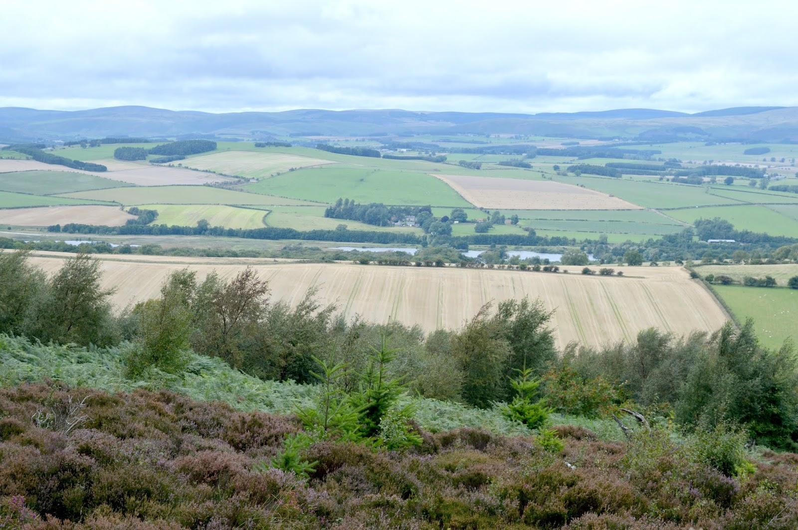 Simonside, Northumberland Cheviot