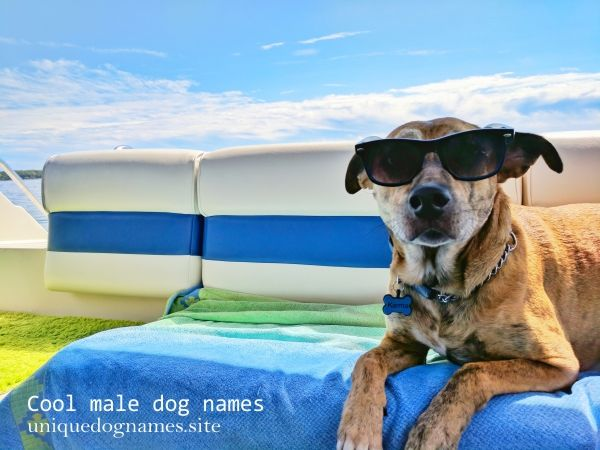 cool male dog names,cool unique dog names
