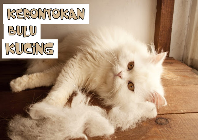 Makanan Kucing untuk Bulu Rontok