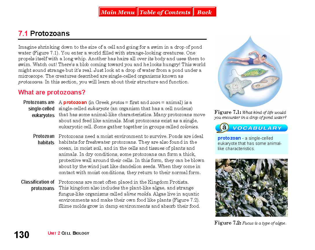 Printable Worksheet On Viruses