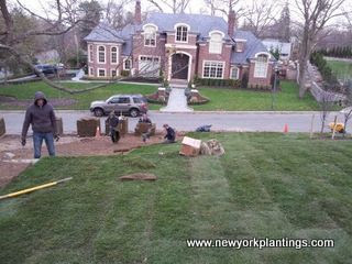 sod installation replacement in Long Island, New York