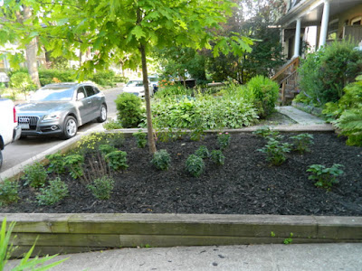 Leslieville Toronto Front Garden Summer Cleanup After by Paul Jung Gardening Services--a Toronto Organic Gardening Company