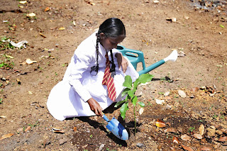 A Wijerama Maha Vidyalaya student plants a tree at the School Nutrition Garden ceremony.