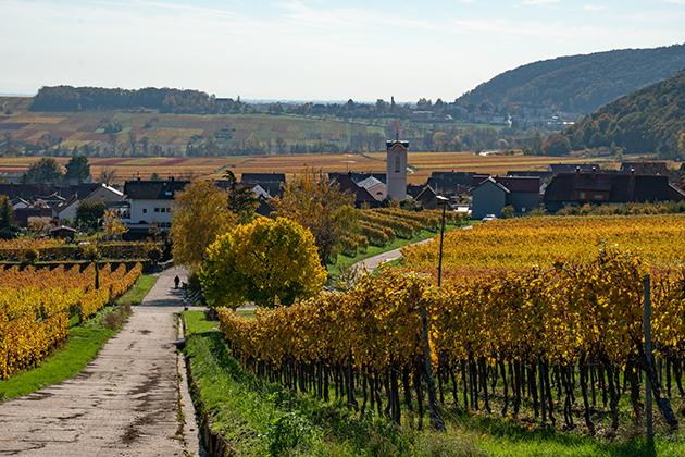 Pfälzer Keschdeweg | Etappe 2 Annweiler bis Albersweiler | Wandern Südliche Weinstraße | Wandern Wasgau 01