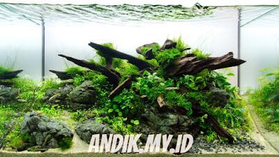 aquascape, aquarium, kayu aquascape,
