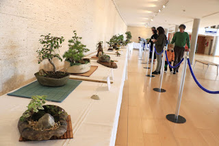 Exposición de bonsáis
