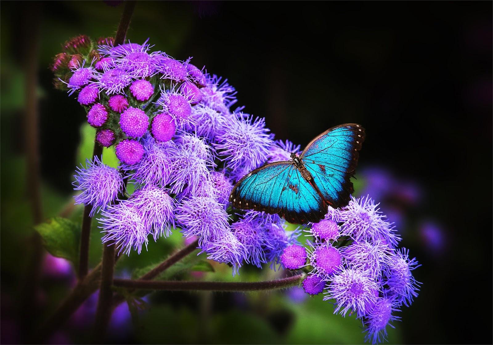 Fotografias De Mariposas Y Flores: BANCO DE IMÁGENES: 22 Imágenes Macro De Mariposas, Aves