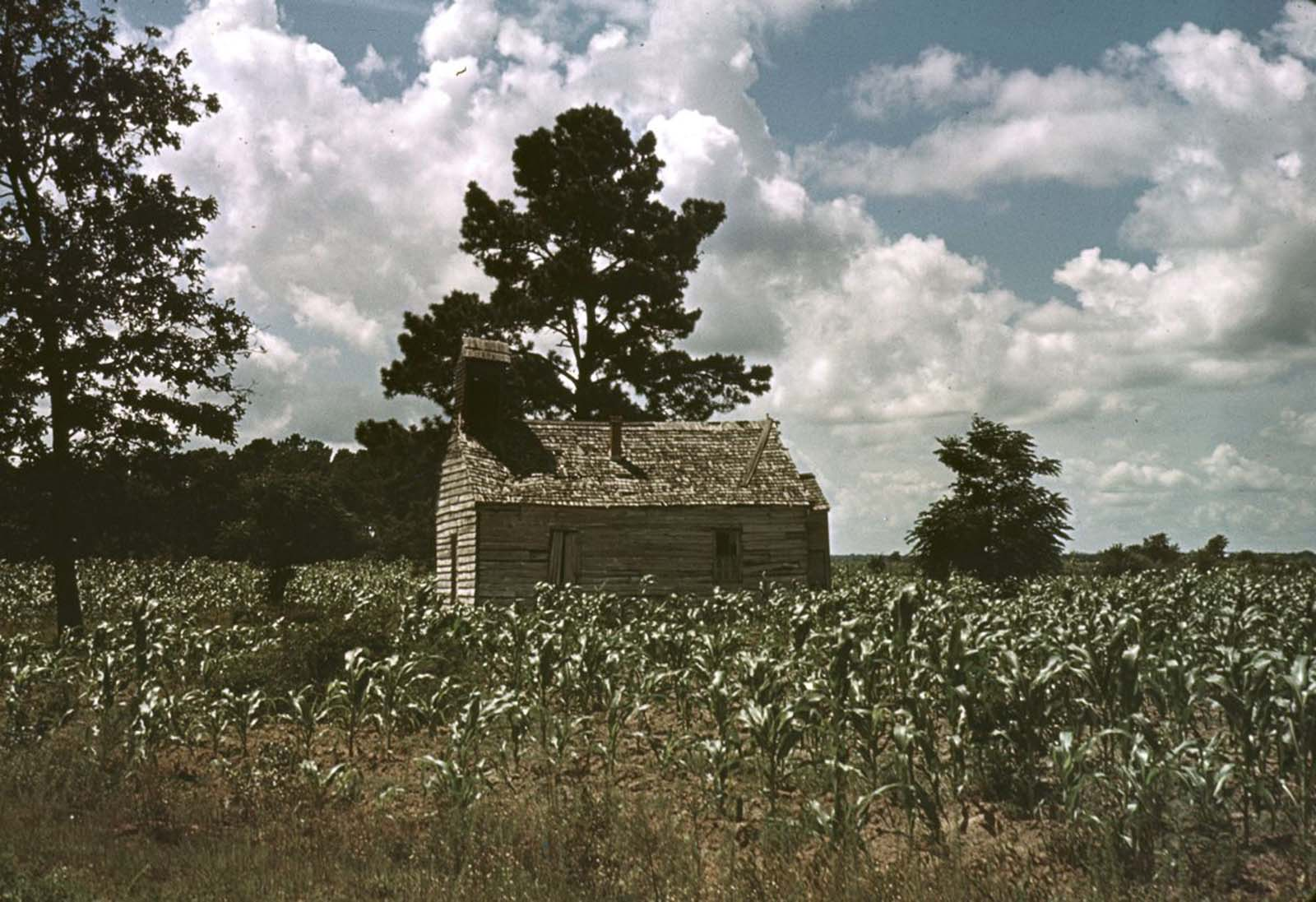 A church in a cornfield in Manning, South Carolina. 1939.