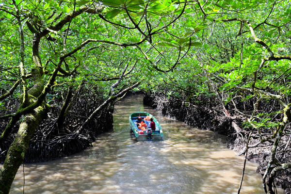 deep mangrove forest the way of Lime stone cave