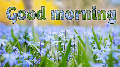 Good morning roses pictures