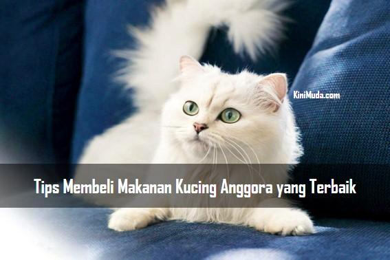 Tips Membeli Makanan Kucing Anggora yang Terbaik