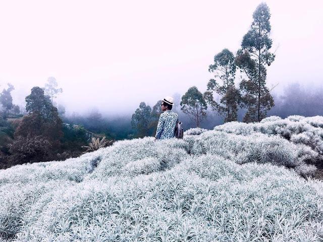 taman bunga edelweis bali