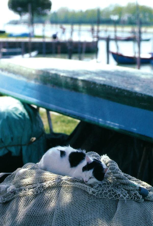 Stray cat of Venice, Italy