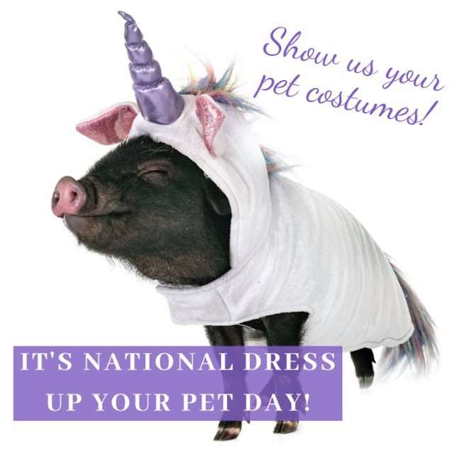 National Dress Up Your Pet Day Wishes Lovely Pics