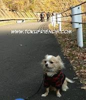 http://1.bp.blogspot.com/-Xw6fT5zwlzY/VneEOW82QWI/AAAAAAAAFT8/rLv76PZlWIc/s1600/rescue%2Bforce.jpg