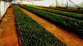 Endurcissement des plants et acclimatation