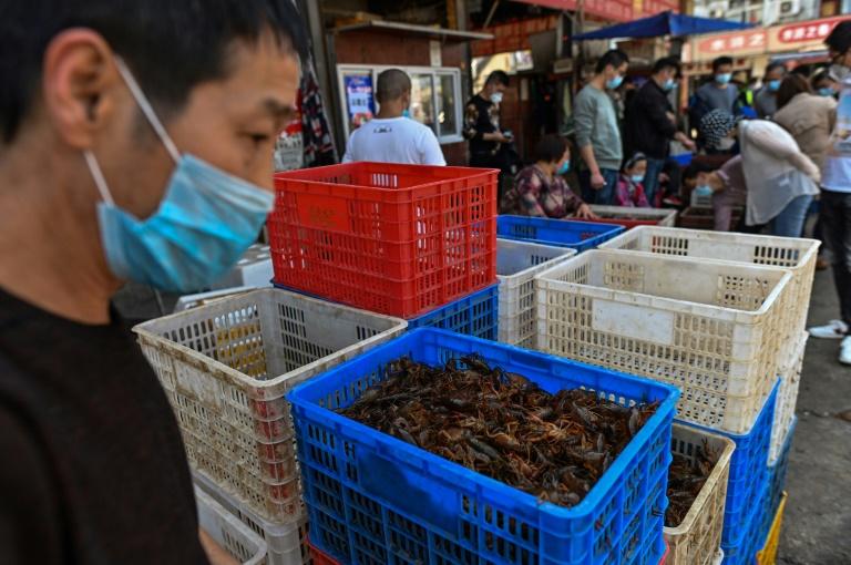 OMS pede suspensão mundial da venda de mamíferos selvagens vivos em mercados