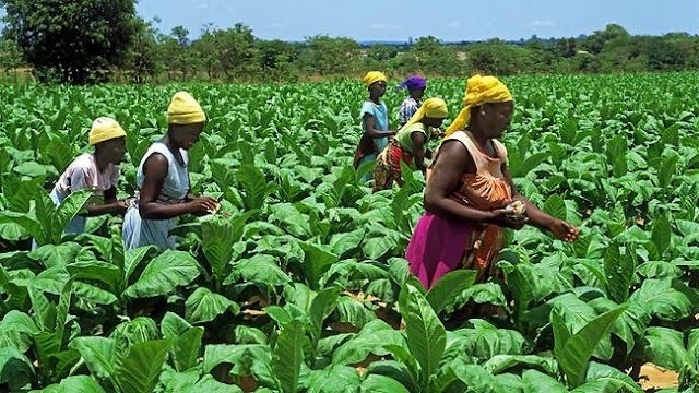 400 workers get respite as farmer returns