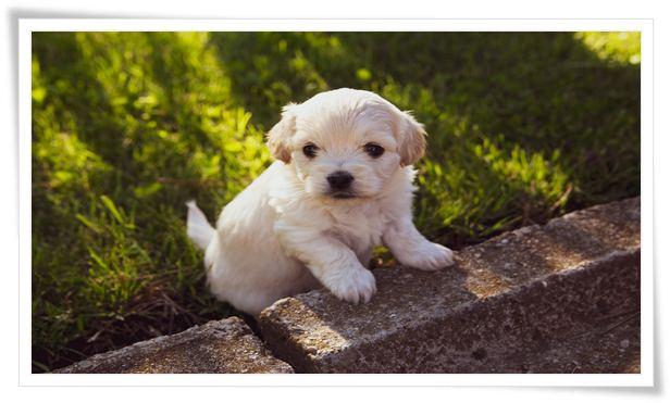 small dog training collar
