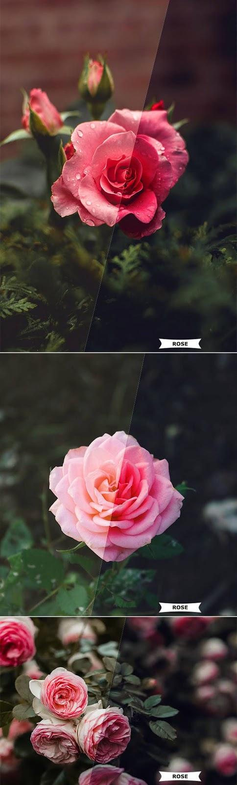 Rose Photoshop Action 26797254