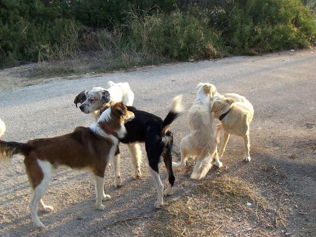 Δήμος Στυλίδας: Συνεδρίαση για τα αδέσποτα ζώα
