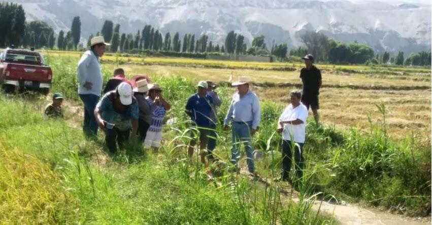 Universidad Esan, Agroideas y Southern impulsarán productividad agropecuaria en Valle del Tambo