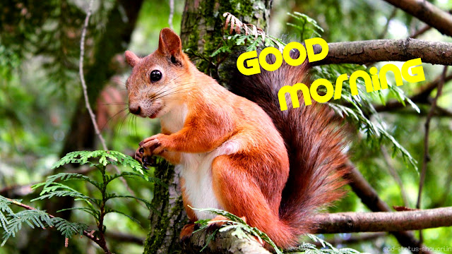 Good morning image animals