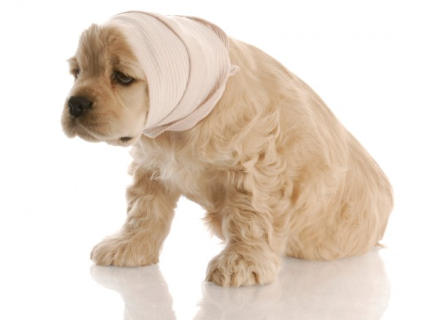 Dog Bladder Infection Home Remedy