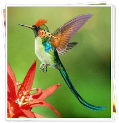 Animals That Start With H - Hummingbird