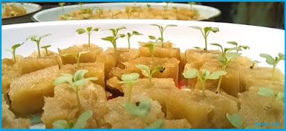 Cara Menanam Sayur Hidroponik Sederhana