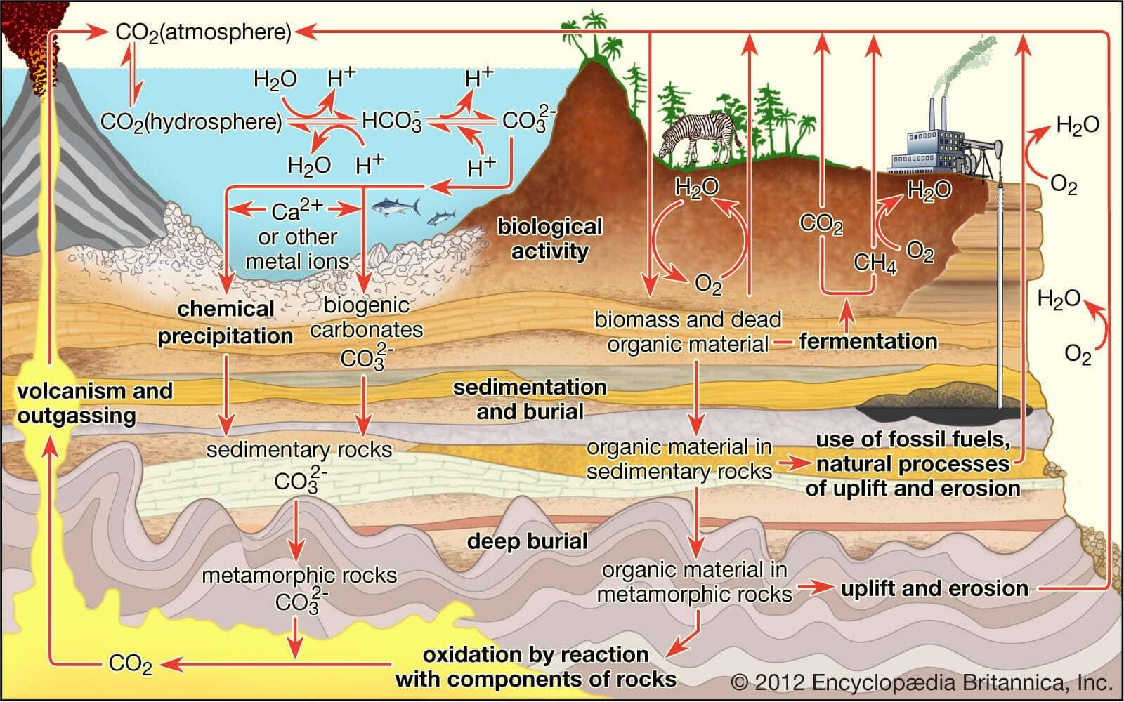 Siklus karbondioksida