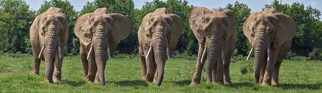 Elephant Life Method யானையின் வாழ்க்கைமுறை