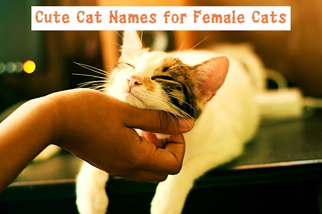 petting a cat
