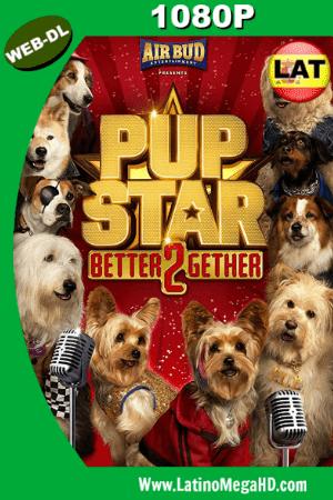 Pup Star: Juntos es Mejor (2017) Latino Full H WEB-DL 1080P ()