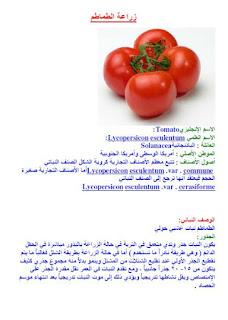 كتاب زراعة الطماطم