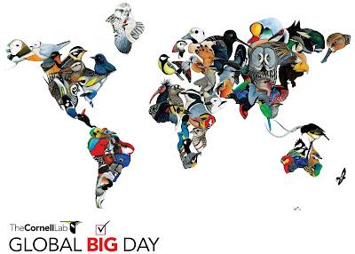 Global Big Day, birding, birdwatching, aves, observar aves, observação de aves, Tocantins, aves do Tocantins, birds, Birds of Brazil, Birds of Tocantins, passarinhar, pássaros, pássaros do Brasil