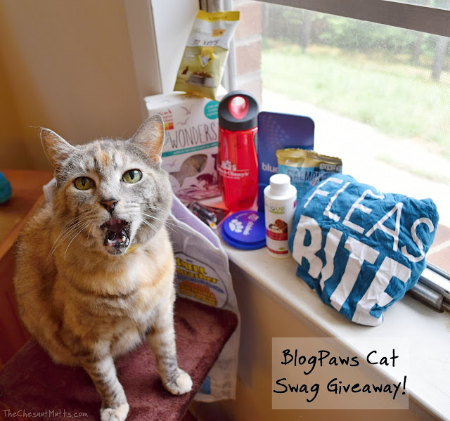 Giveaway: BlogPaws Cat Swag Giveaway