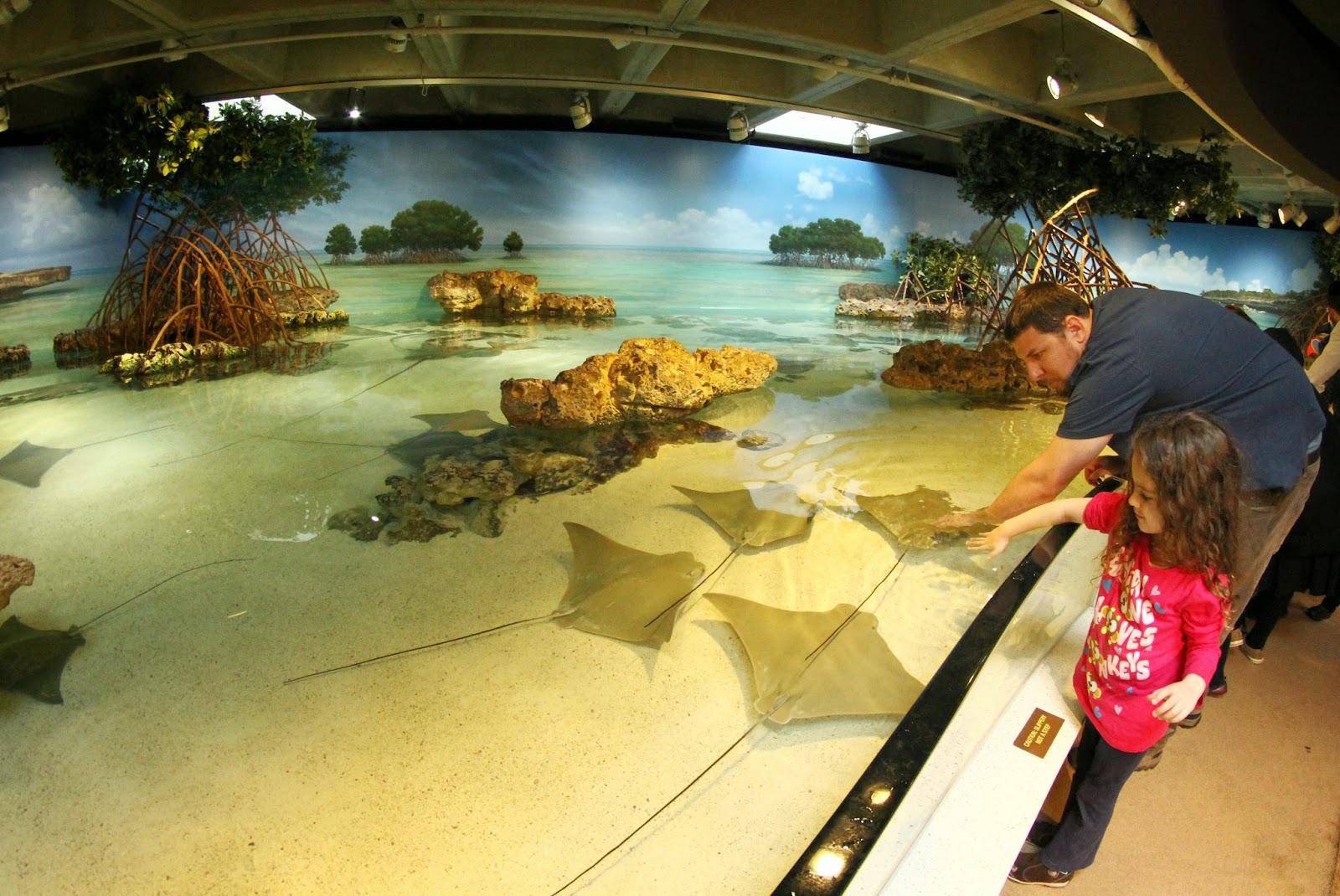 Visitar o AQUÁRIO DE BOSTON - Nature vs History em Boston | EUA