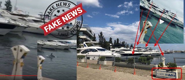 FAKE NEWS: Δεν εμφανίστηκαν δελφίνια στην μαρίνα Καλαμακίου